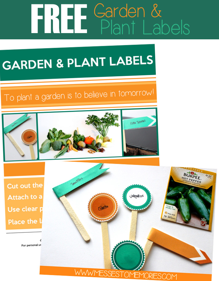 photo relating to Printable Plant Labels named Printable Backyard and Plant labels
