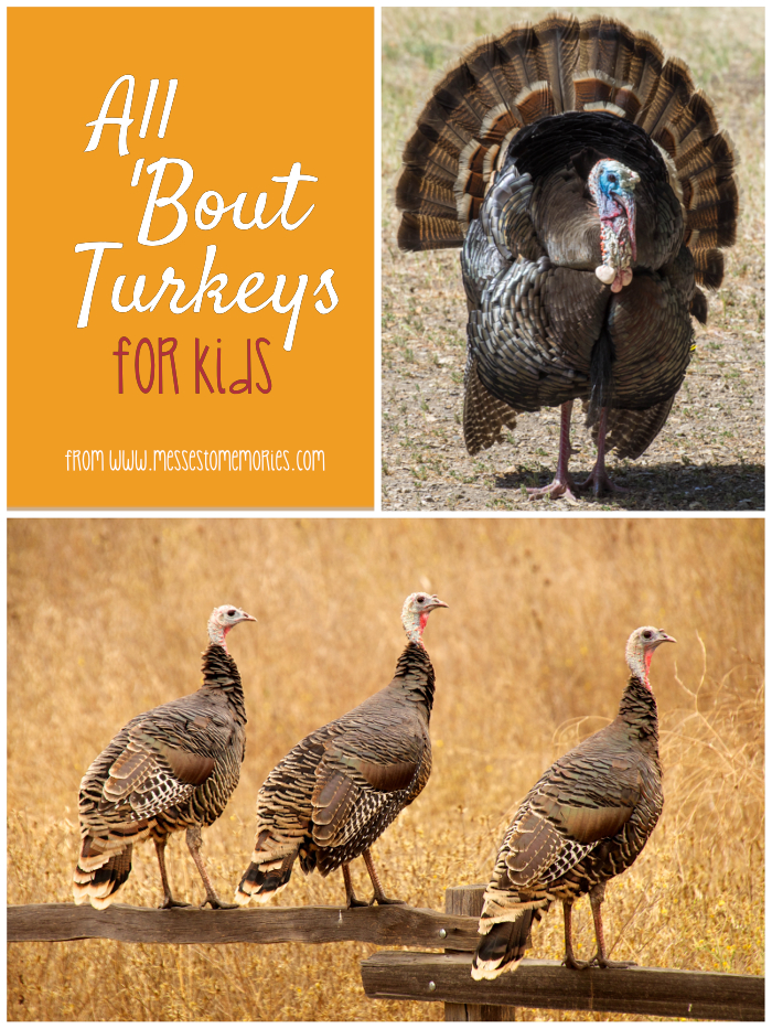 Turkey lessons and ideas for kids from Messes to Memories