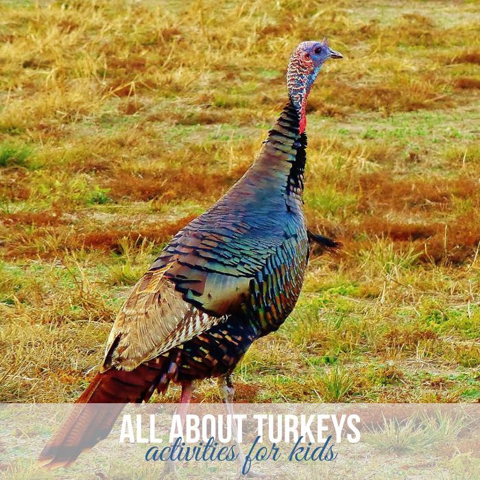 Turkey Activities for Kids from Messes to Memories