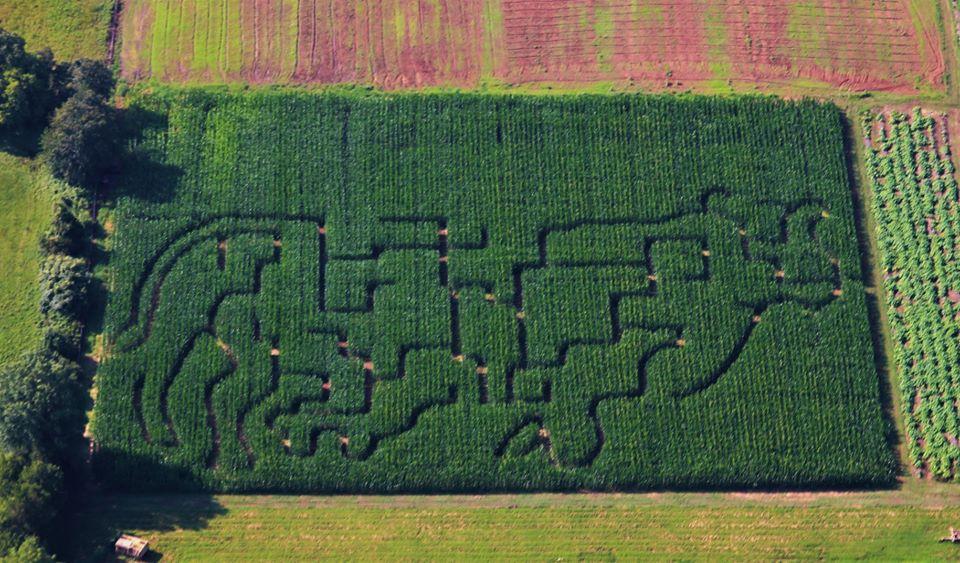 messicks farm market corn maze 2018
