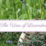 The Uses of Lavender