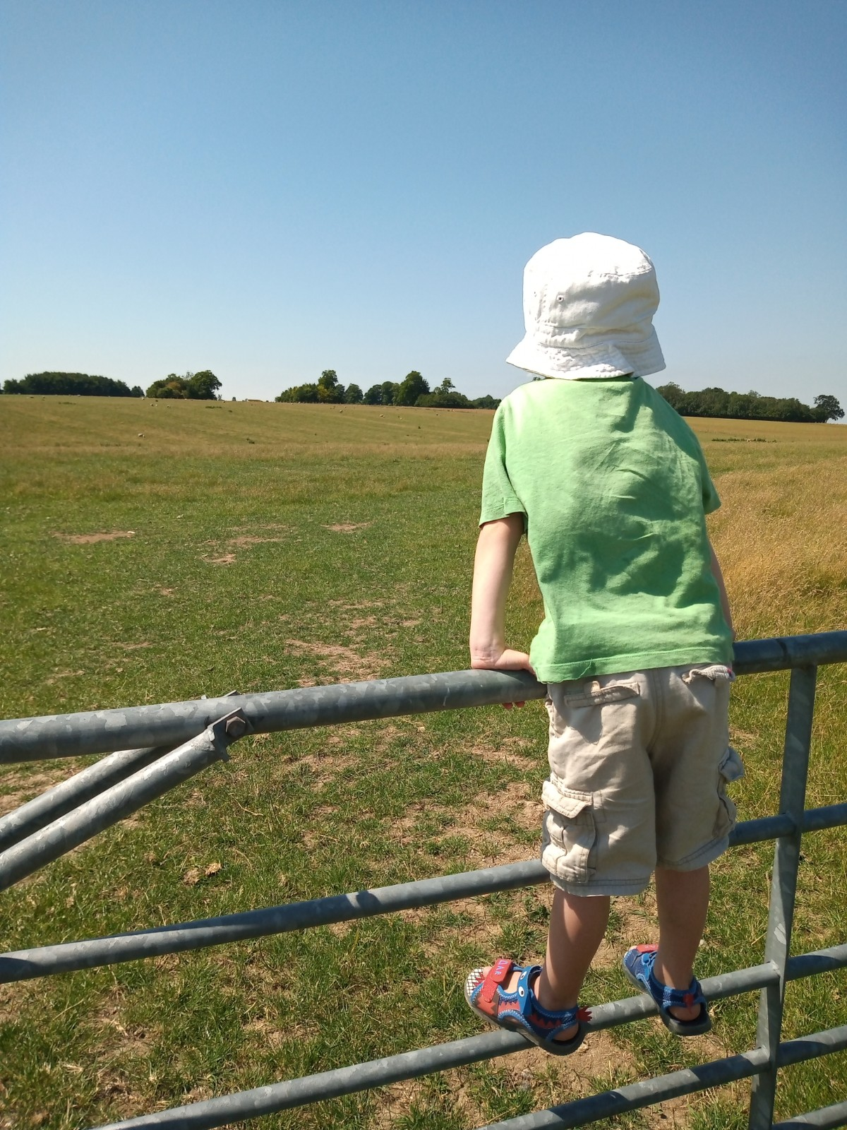 Boy on gate by sunny field