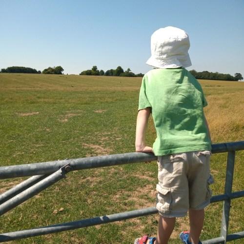 Boy on gate by sunny field