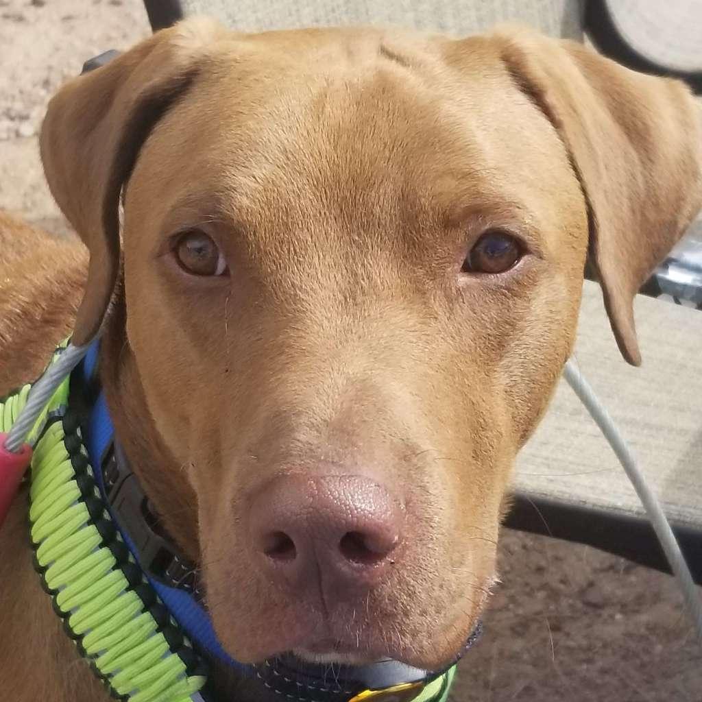 Rescue Pup Coco