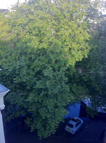 me_tree1