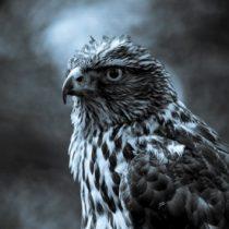 Tolga ÖZER kullanıcısının profil fotoğrafı
