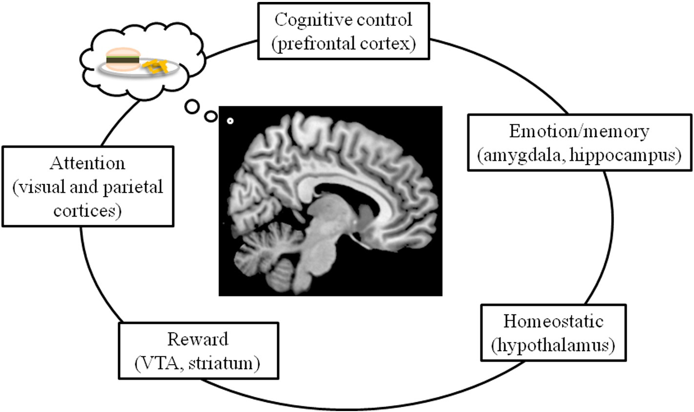 Central Nervous System Regulation Of Eating Insights From