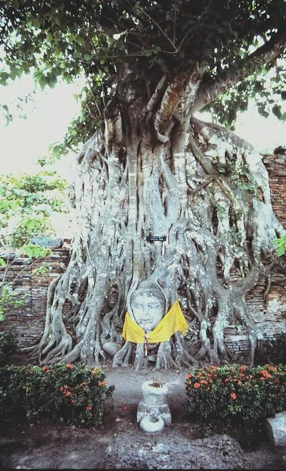 במקדשי איוטאיה 1985