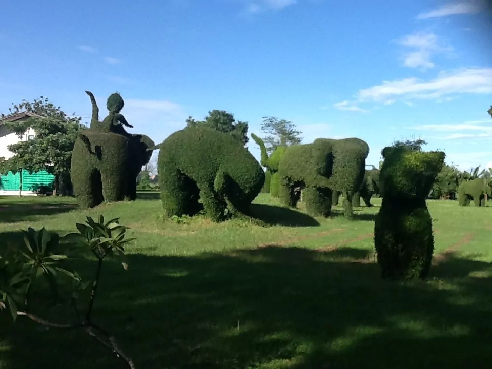 Sculpture  shrubs on the side way of roat 211