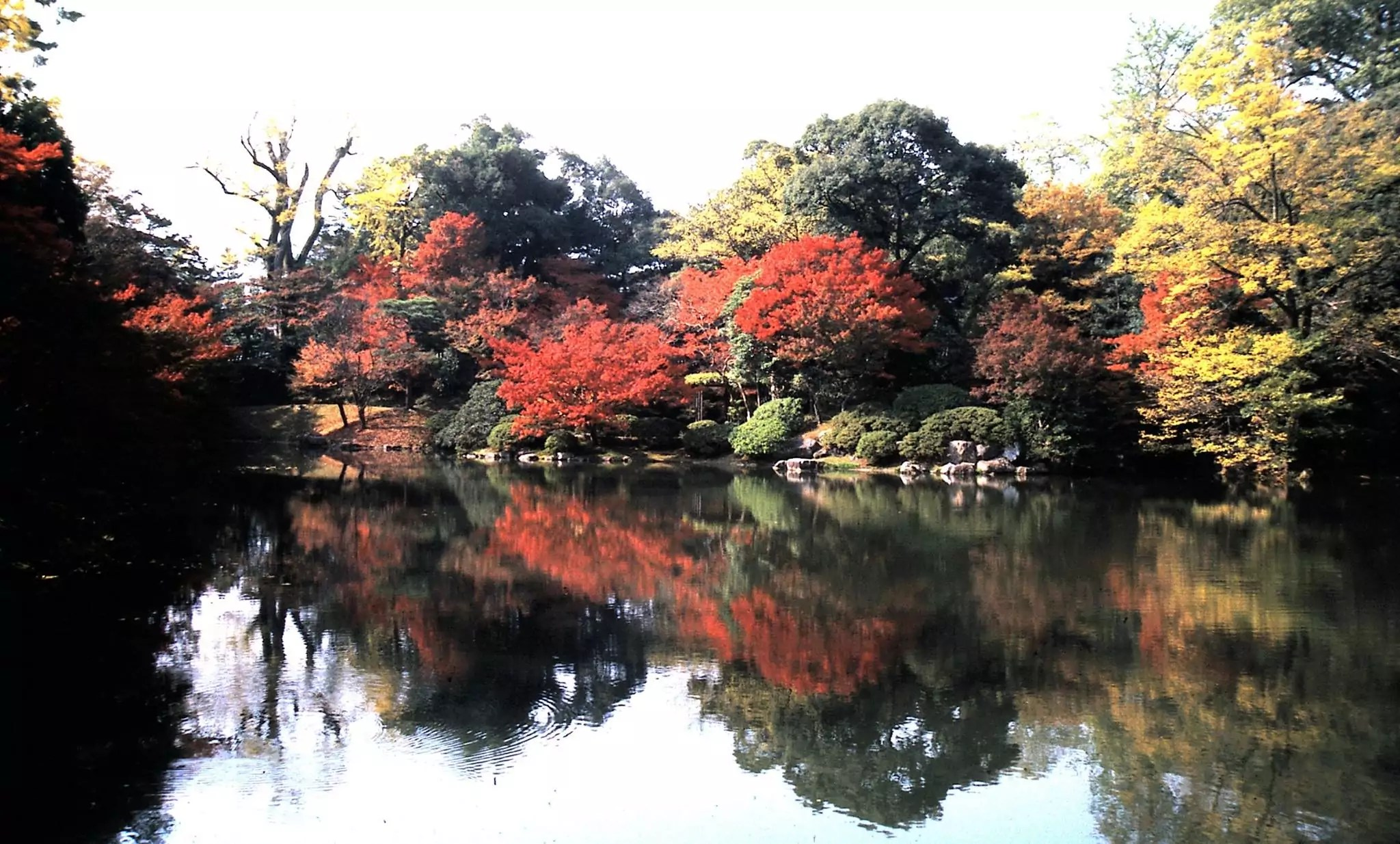 KYOTO BEAUTIFUL LANDSCAPE IN THE FALL