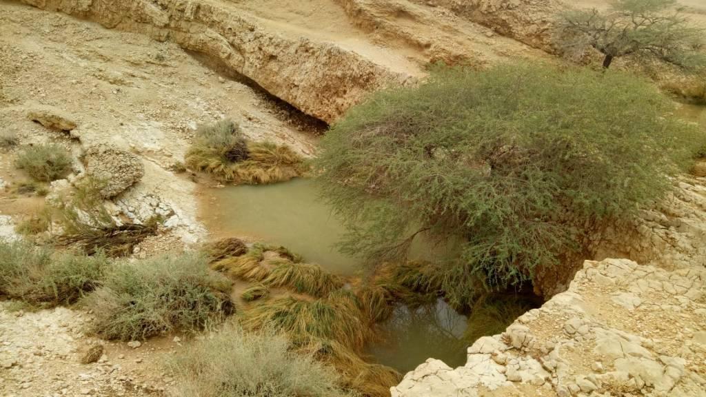 גב מים בערבה