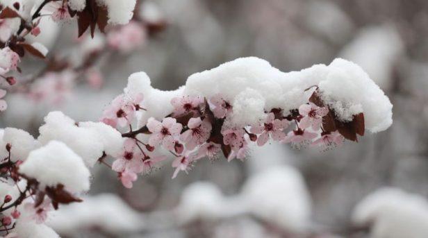 L'ondata di freddo del 7-8 aprile 2003! Quando la primavera si traveste da VERO INVERNO! -