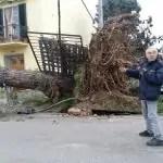 albero vento 01
