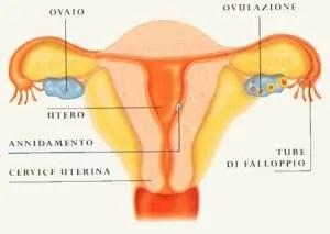 tumore-delle-ovaie