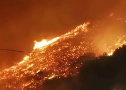 incendio arborea