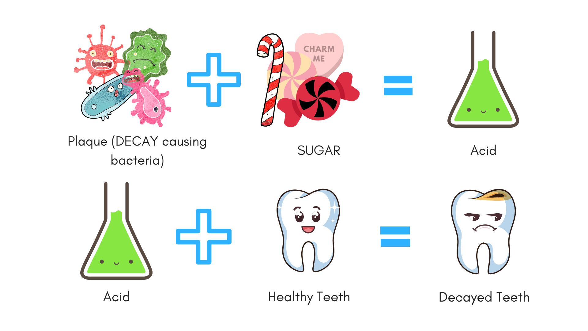 Germs Plus Sugar Acid Tooth Decay