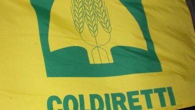 Photo of Agricoltori cosentini in stato di agitazione: tensione tra Coldiretti e la Regione