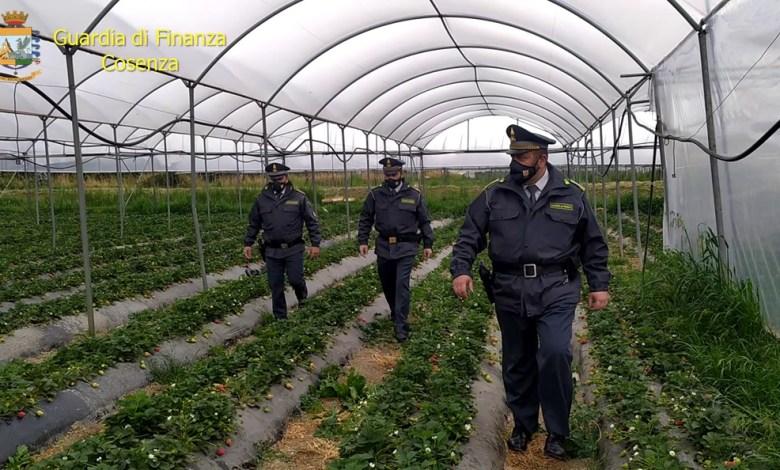 Photo of Indebita percezione di indennità agricole: 67 denunciati