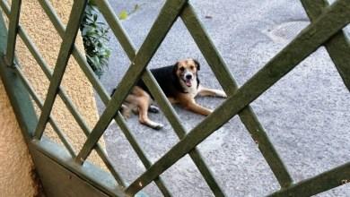 Photo of Siderno: cane randagio in difficoltà tra via Mazzini e via Palermo