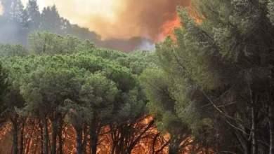 Photo of Incendi: il fronte del fuoco circonda le Faggete Vetuste e minaccia Polsi