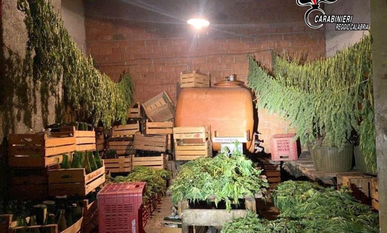 """Photo of Autorizzati alla coltivazione di Canapa sativa, raccolgono """"erba"""" illegale: denunciati"""