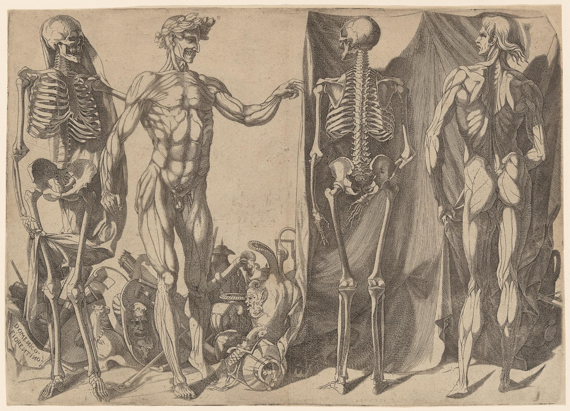 Anatomy In The Renaissance