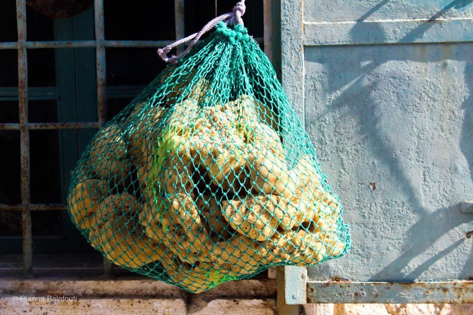 σφουγγάρια θαλάσσης