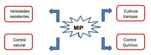 esquema-mip-nysius spp