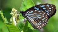 libelulas-familia-libellulidae-orden-odonata