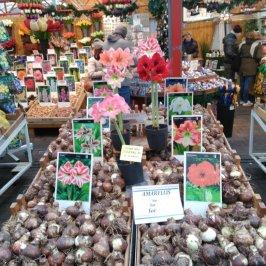 Bulbos de diferentes flores a la venta
