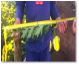 flores-amarillas-3