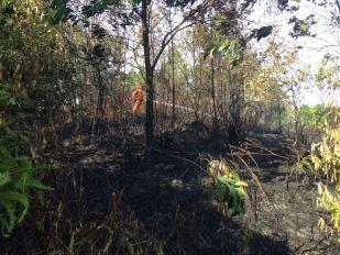 Petugas kebakaran yang tengah konsentrasi memadamkan api di Hutan Persemaian sore tadi.