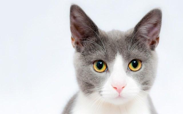 cat-1885511_960_720
