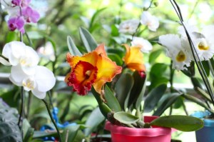 SM City San Jose del Monte opens SJDM Green Hub exhibit guide to green quarantine