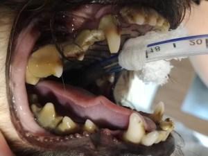zubní kámen u psa