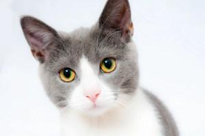 kastrace kočky a koťat