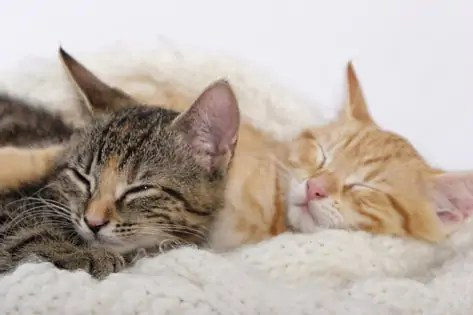 kocour nebo kočka