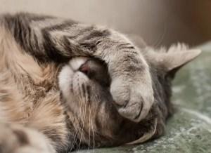 zvracení u kočky
