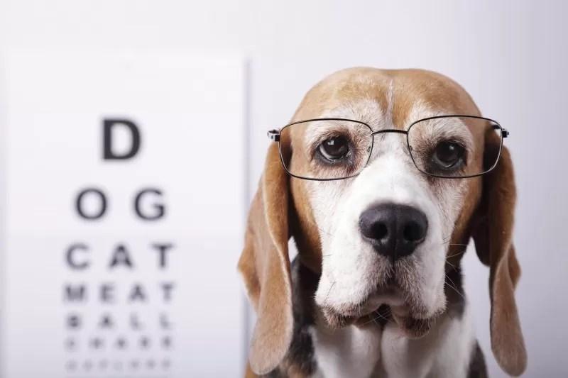 veterinární oftalmologie