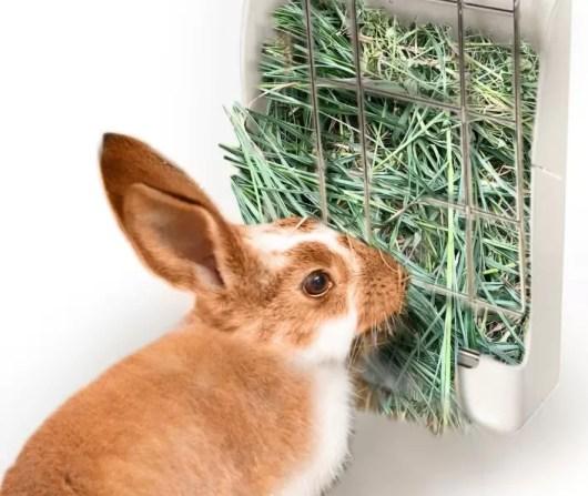 Seno by mělo tvořit přes 90% králičího jídelníčku