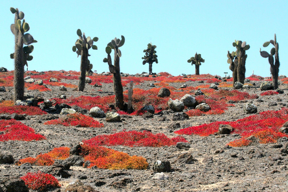 Galapagos Plant Life A Lesson In Adaptation And Evolution
