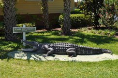 Caribe Cove alligator