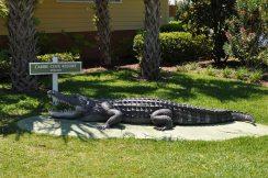 Caribe Cove alligator