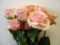 Spray Roses Archives - Metropolitan Wholesale ...