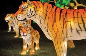 Zoo Lights -- Photo: Hanart Culture, LLC