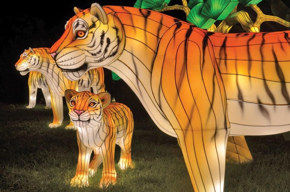 zoolights, christmas, zoo