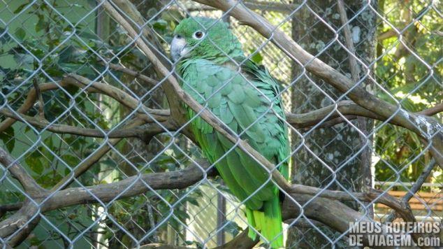 Papagaio no Zoológico de Balneário Camboriú