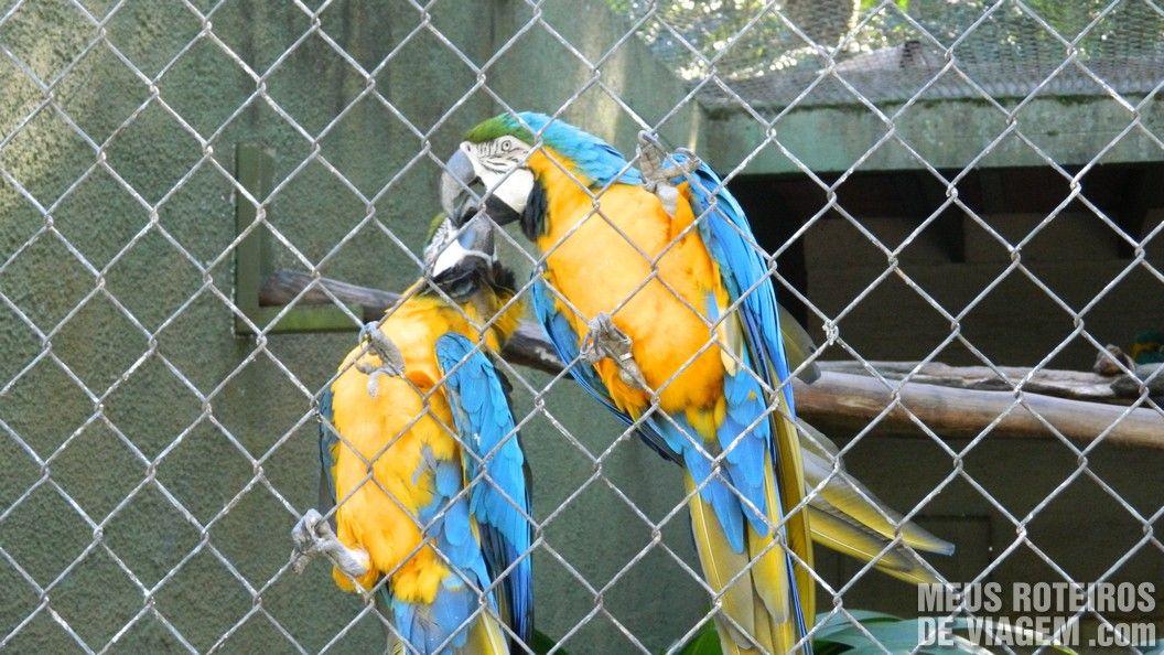 Araras no Zoológico de Balneário Camboriú