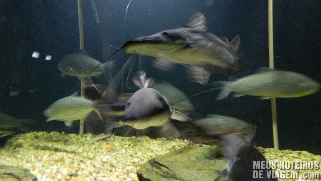 Peixes no Zoológico de Balneário Camboriú
