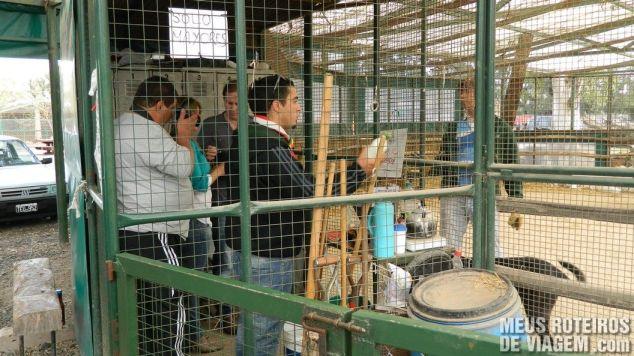 Entrando na jaula